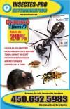 Extermination Insectes Pro